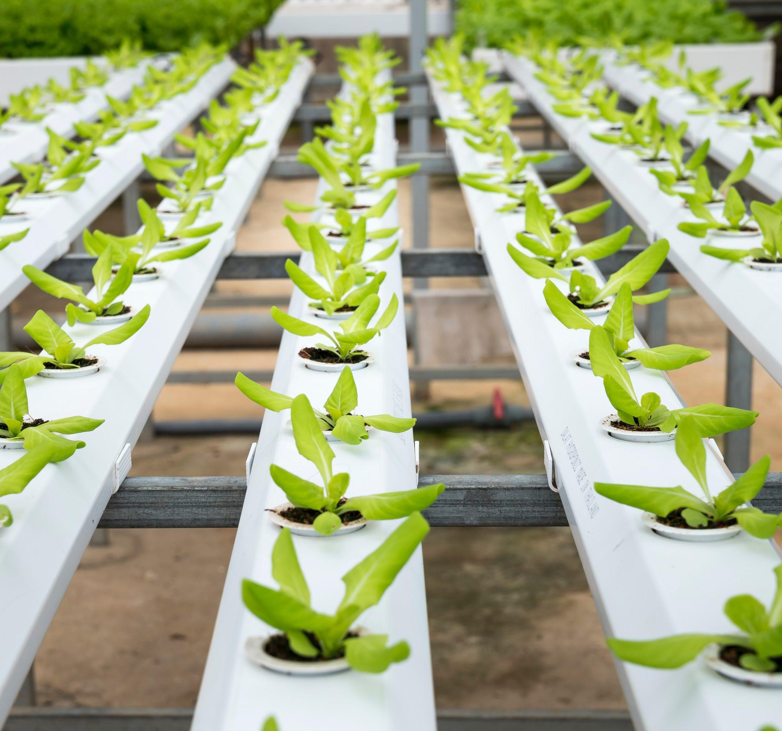 Imagen de Agricultura Urbana